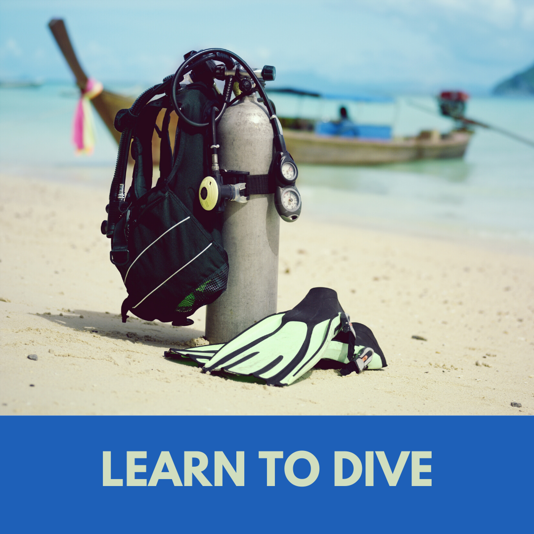 learn-to-dive