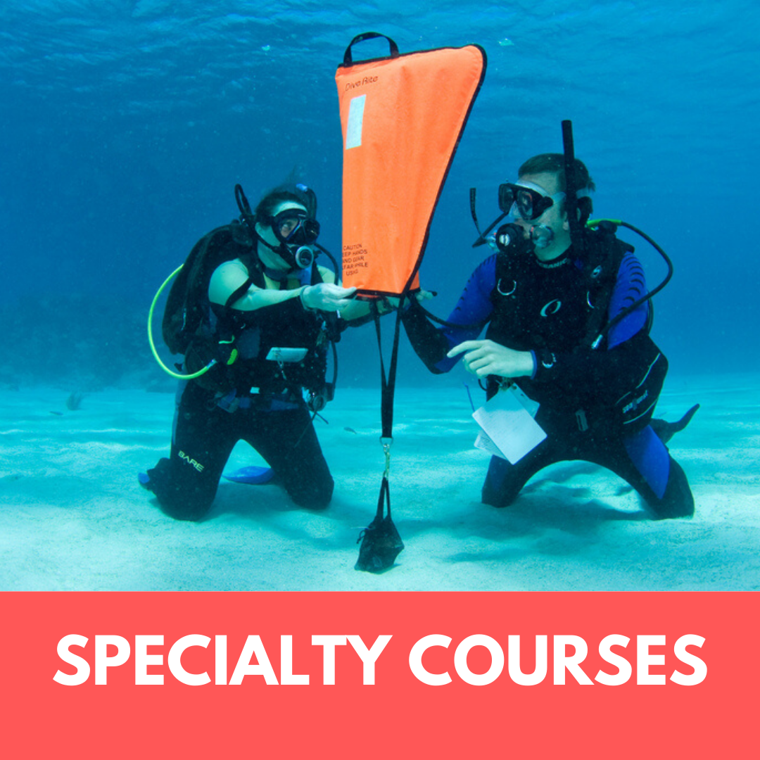 speciality-courses